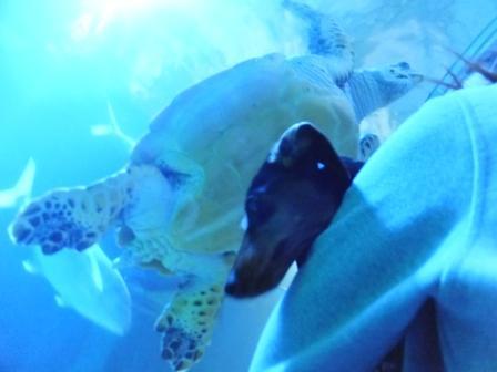 ウミガメとりおん