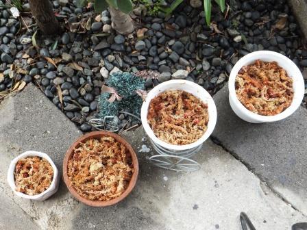 サギソウの鉢