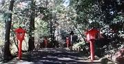 箱根神社2 参道