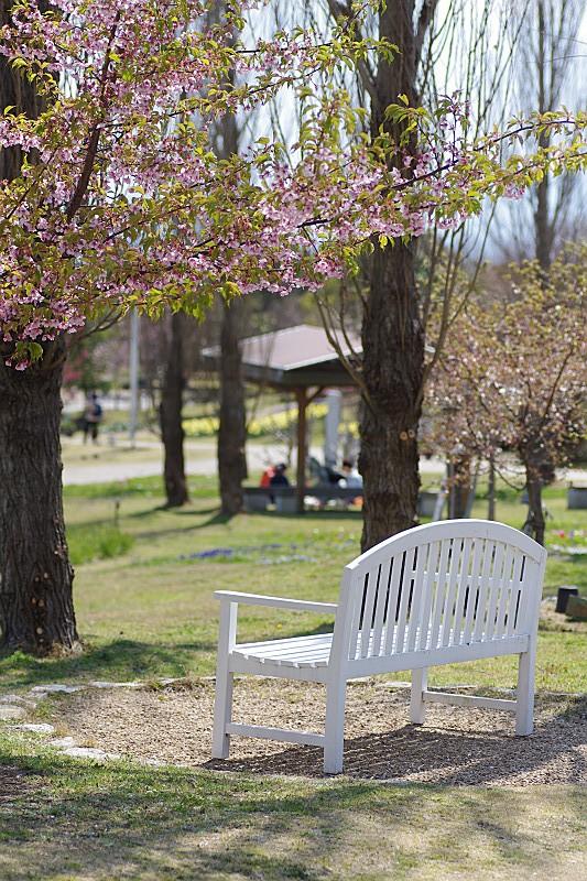 葉桜と白い椅子