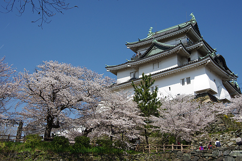 定番の桜とお城