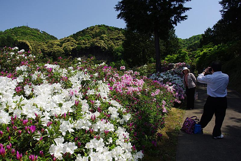 記念撮影、三室戸寺