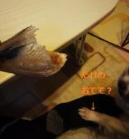 レンつめ1
