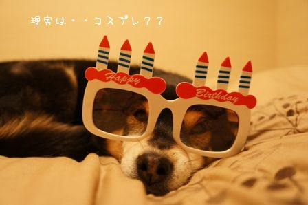 HAPPY BIRTHDAYちき①