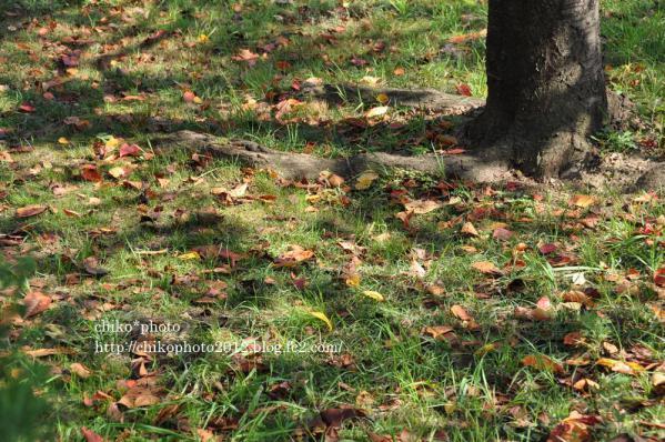 photo-78 木漏れ日