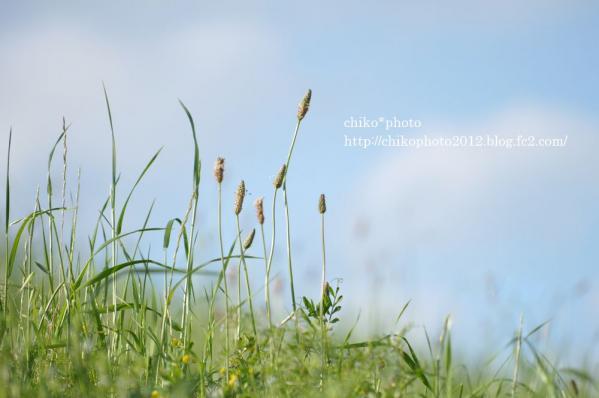 photo-82 おさんぽ日和1
