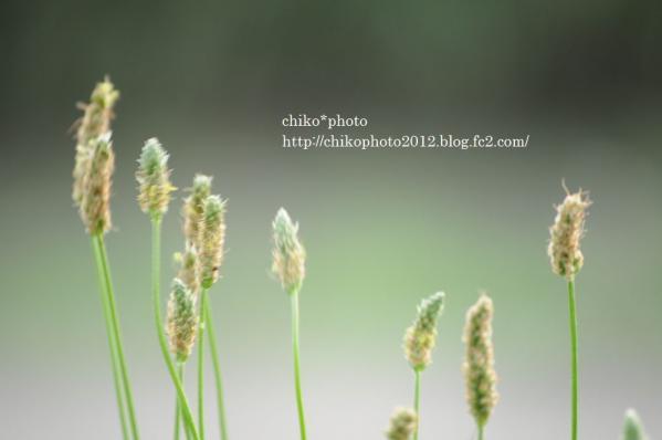 photo-82 おさんぽ日和2