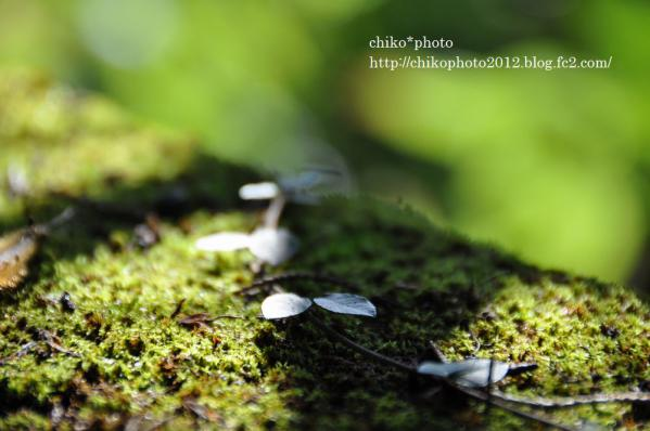 photo-79 木漏れ日3