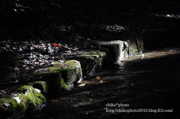 photo-79 木漏れ日1