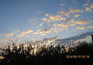 リンゴ園の夜明け