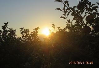 りんご園に陽が昇