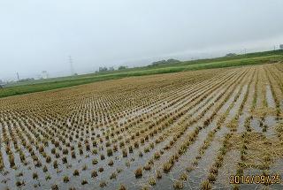 田んぼに水たまる
