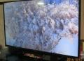 雪を被った高山植物