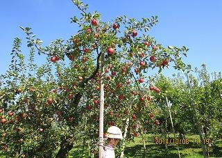蒼い空に赤いりんご