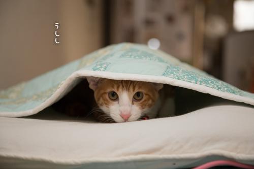 隠れてるのだ