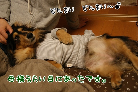 086_20120321063138.jpg