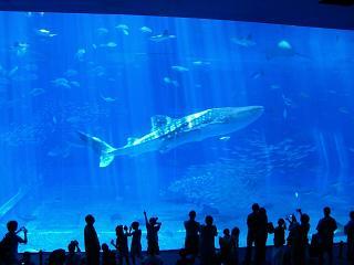 沖縄 美ら海水族館を 10倍楽しもう!!