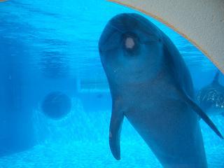 癒し系イルカ