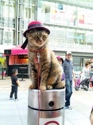 赤いシャッポの猫ちゃん