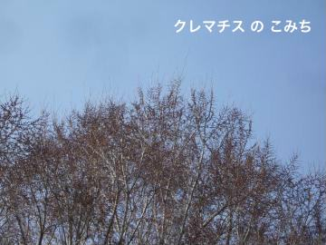 IMGP5838_convert_20120401232913.jpg