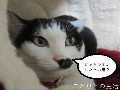 のんちゃん20131122
