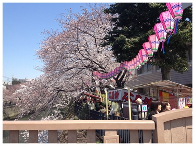0408桜