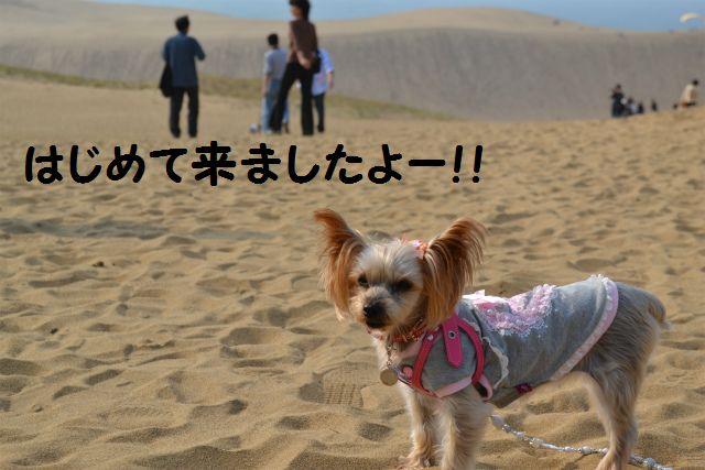 砂丘だよ!