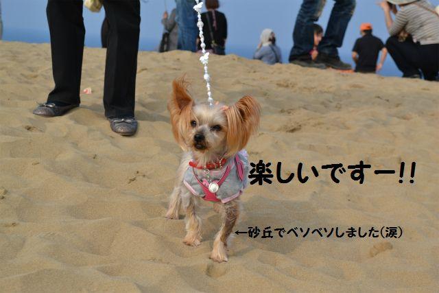 砂丘の中心で愛をさけぶ