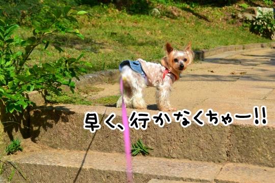 白兎神社2014秋 (3)