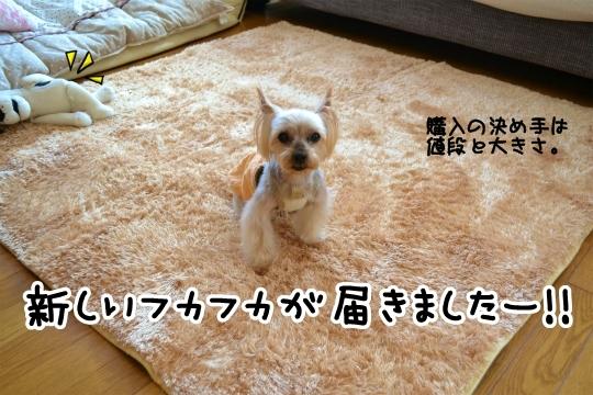 楽天セール2014秋 (1)
