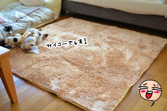 楽天セール2014秋 (3)