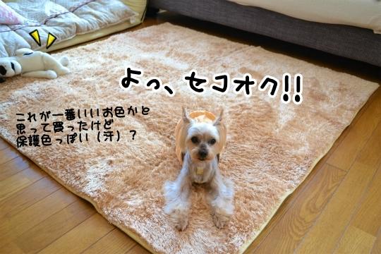 楽天セール2014秋 (4)
