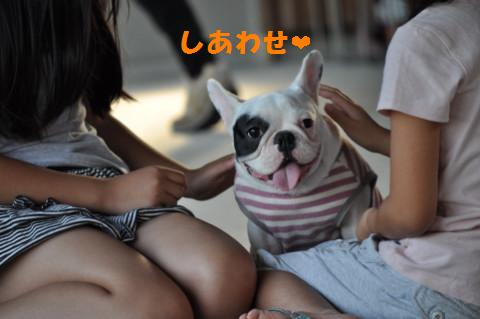 shiawase4_010.jpg