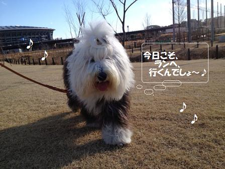 お散歩いくよ (6)