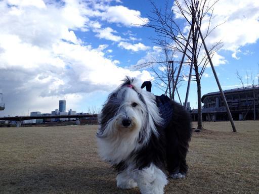 美犬Cookie