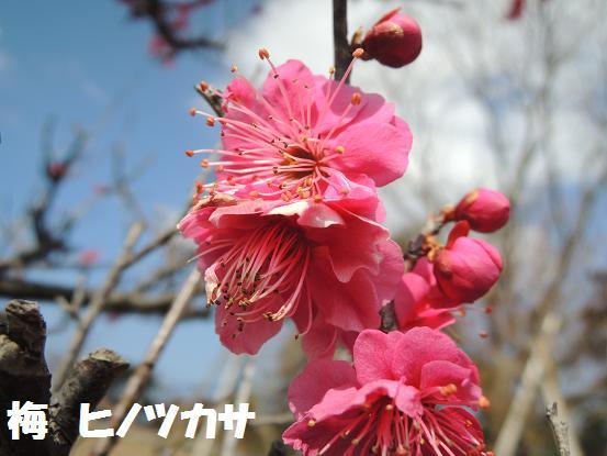 130302-19hinotsukasa.jpg