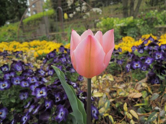 130406-06flower02.jpg