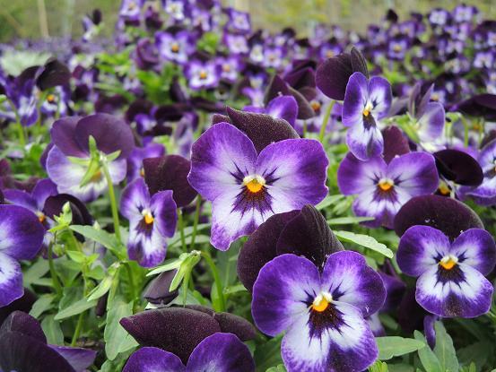 130420-05flower03.jpg