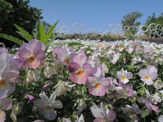 130504-18flower.jpg