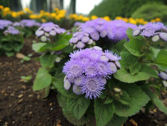 130511-19flower02.jpg