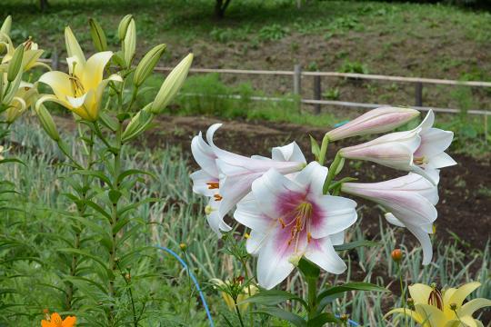 130629-09flower01.jpg
