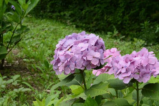 130629-12flower03.jpg