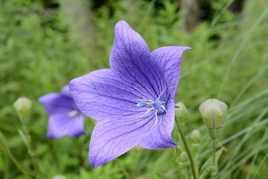 130629-13flower04.jpg