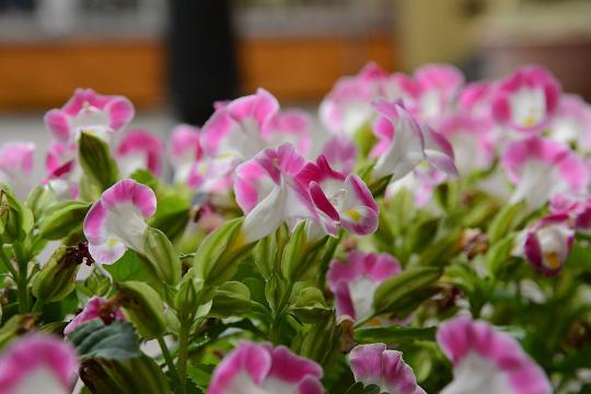 130629-16flower05.jpg