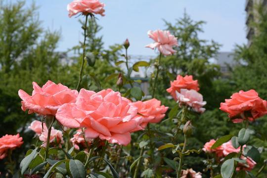130720-15flower02.jpg