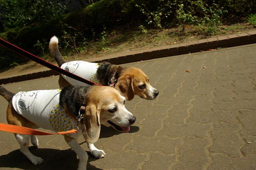 110910-03cookychara walk
