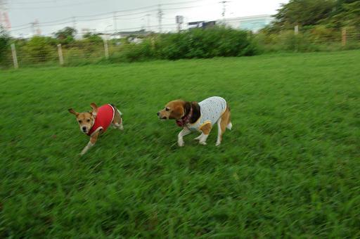 110911-10sumomochara run