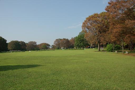 111010-09shibafu hiroba view