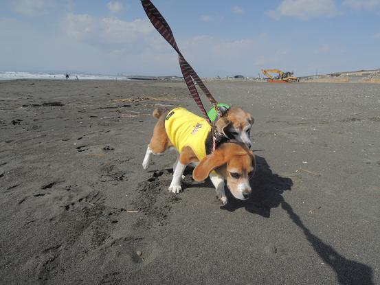 130302-30cookychara walk on the beach02