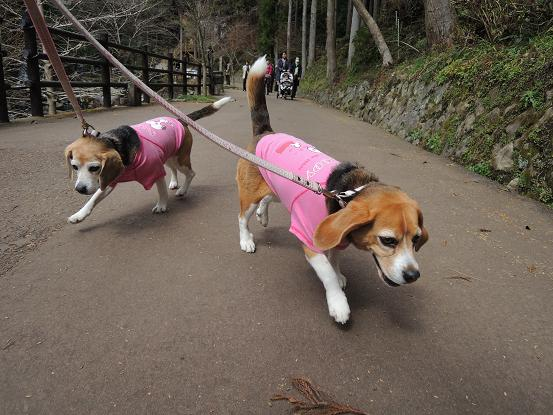 130315-13-01cookychara walk in nanadaru